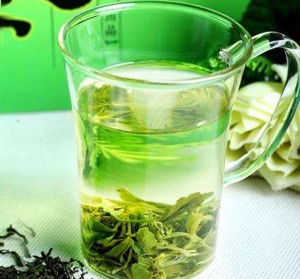 产量效益双丰收 日照绿茶打响