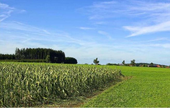 首都北京农业创新团队带动增收150亿 获得专利授权600余项