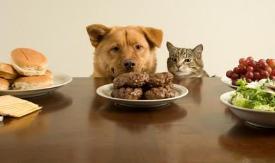 寵物糧食屬于商標哪個類別