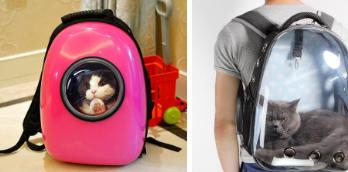 宠物背包属于商标哪个类别?